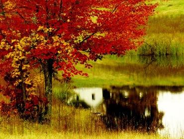Осенние деревья и кустарники