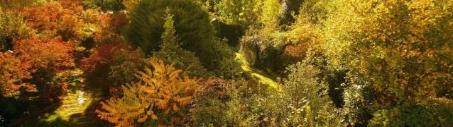 Осенние вечнозеленые кустарники