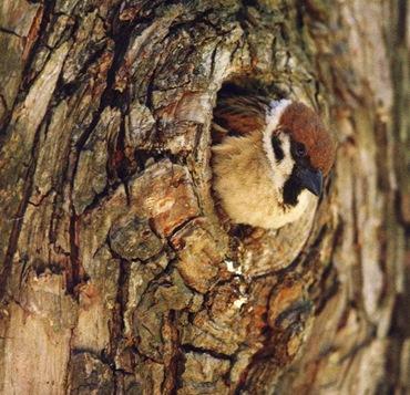 Лечение дупла у дерева