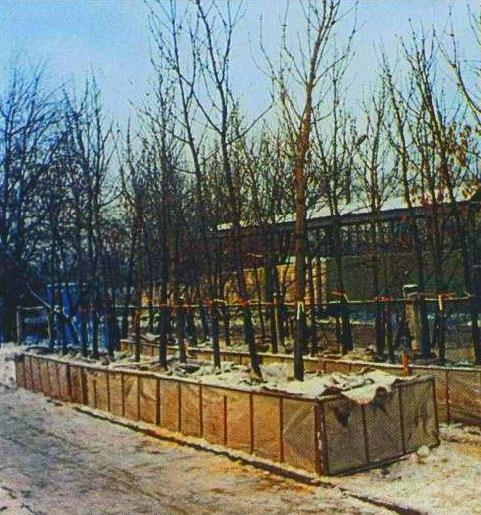 Зимняя посадка деревьев крупномеров