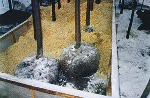Посадка крупномеров с закрытой корневой системой